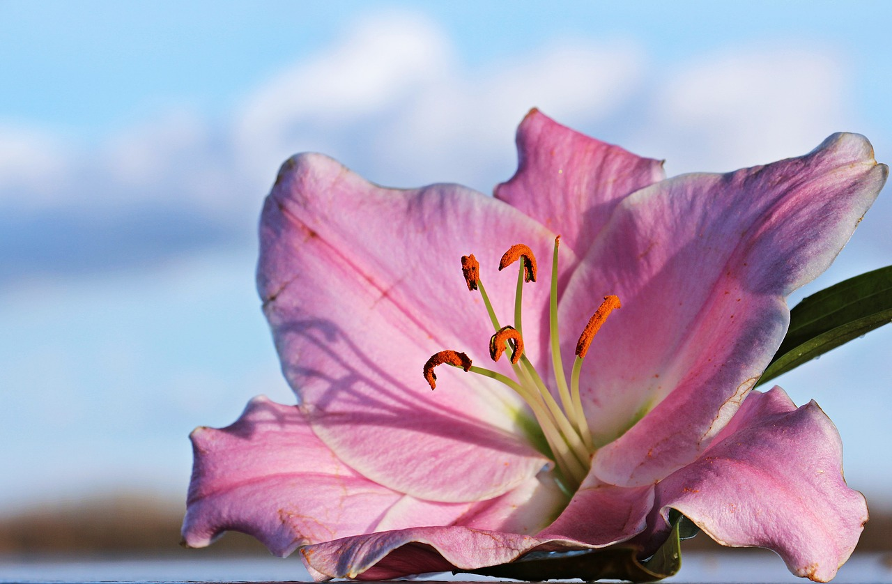 Heilige Blume. Gruß des Todes