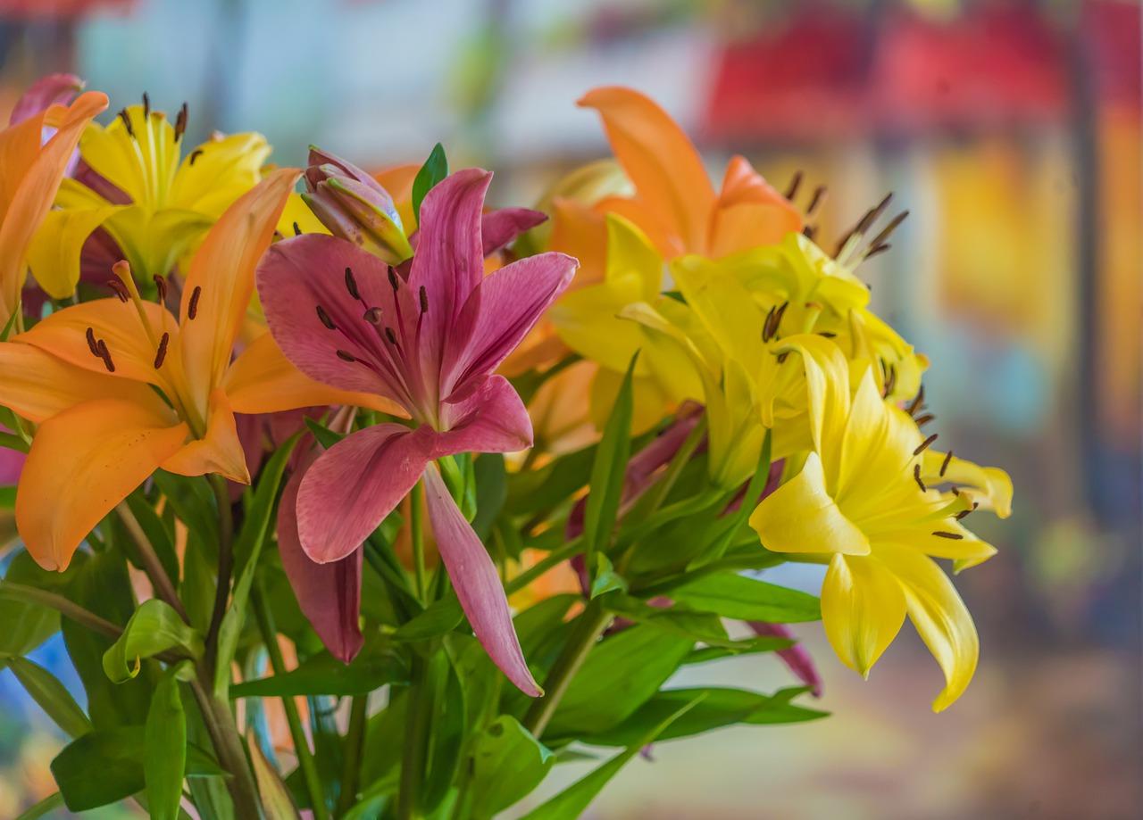 Zu prachtvollen Blumensträußen gebunden